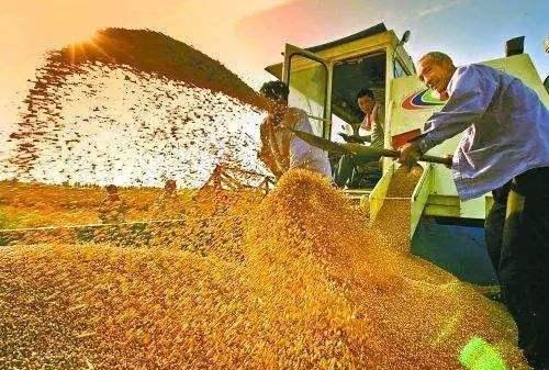 应理性看待粮食作物效益