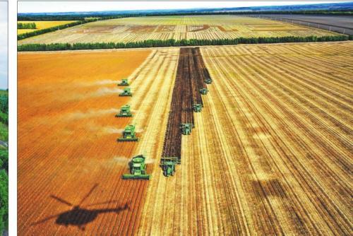 黑龙江水稻生产质量和水稻农机化技术水平提升明显