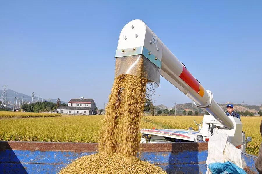 秋粮收购平稳有序进展顺利 截至1月5日,累计收购秋粮2155亿斤