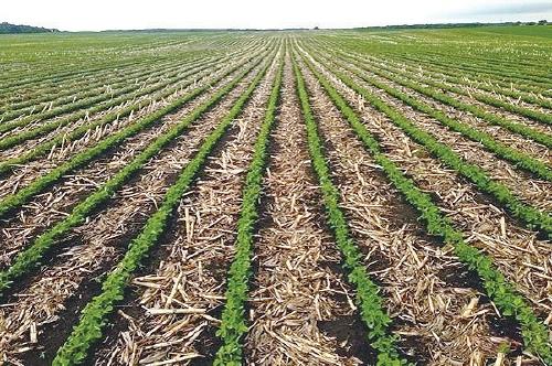 超越合作社:保护性耕作,我们认准了