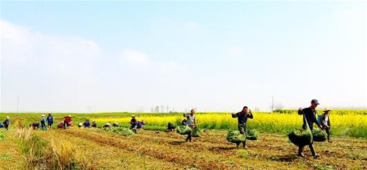 农业农村部计划今年培训百万高素质农民
