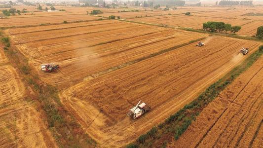 """安徽省2020年""""三夏""""收获小麦3546万亩,进度过82.5%"""
