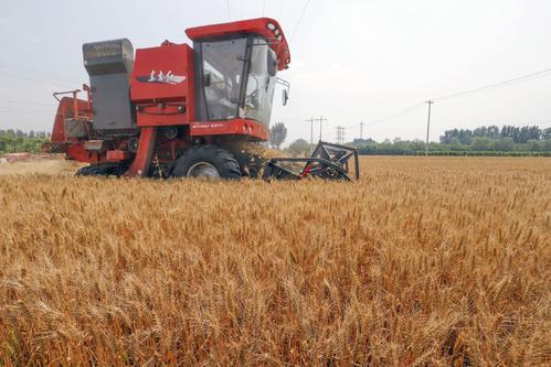 新疆小麦机收率达97.48%