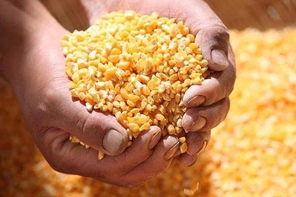 2018年玉米收割机销量分析及2019年市场预测