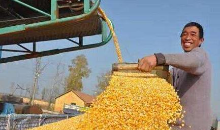 2018年全国粮食总产量65789万吨 比去年下降0.6%