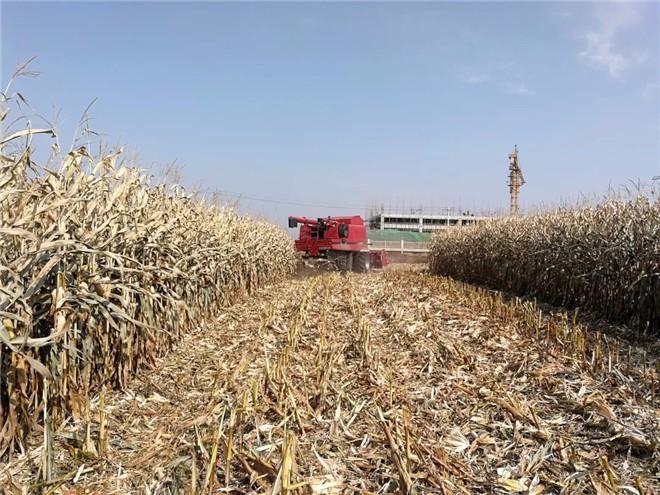 凯斯AF4088收割机一个作业期收获大豆、高粱、玉米6000亩
