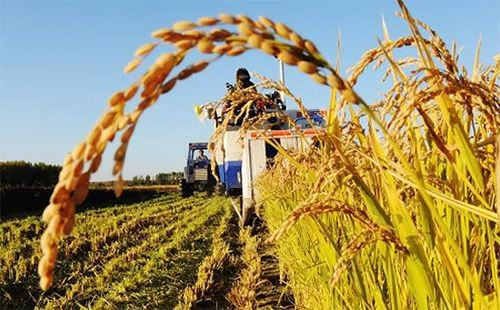 """新型农业经营主体带动小农户还需""""推一把"""""""
