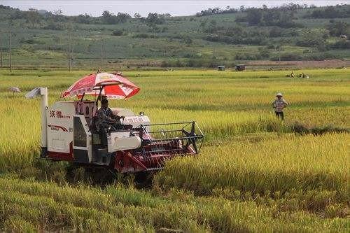 """""""四轮驱动""""提升新型农业经营主体服务力"""