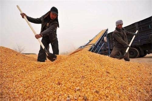 国家粮食和物资储备局关于进一步做好东北地区秋粮收购工作的通知