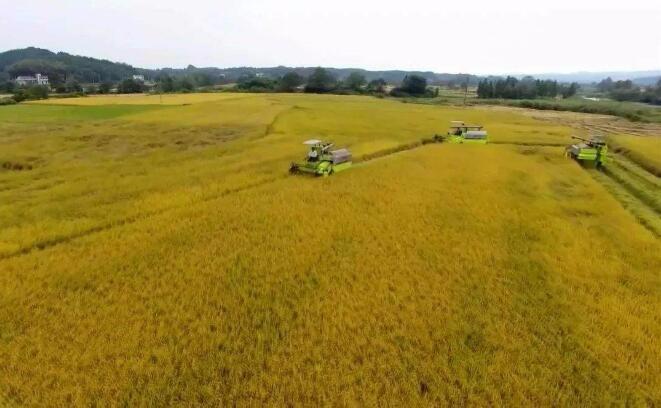 袁寿其 :完善农机装备创新体系 助推农业农村现代化