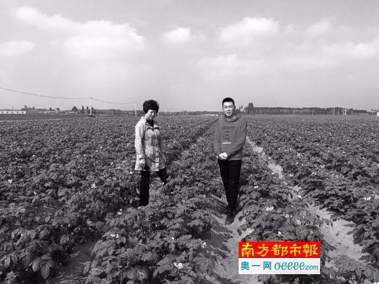 """""""北薯南种""""共同致富 春节留守能挣10万元"""