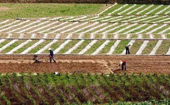 农业农村部:今年春耕扩大大豆和油料生产