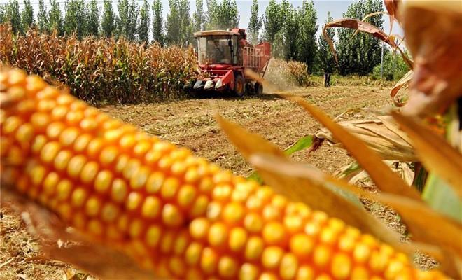 如何推进玉米产业转型升级、提质增效?