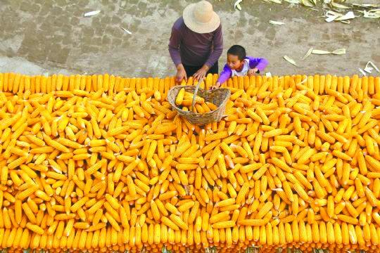 2019年我国玉米市场面临五大挑战