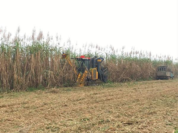 广西开展甘蔗收获机推广鉴定可靠性试验