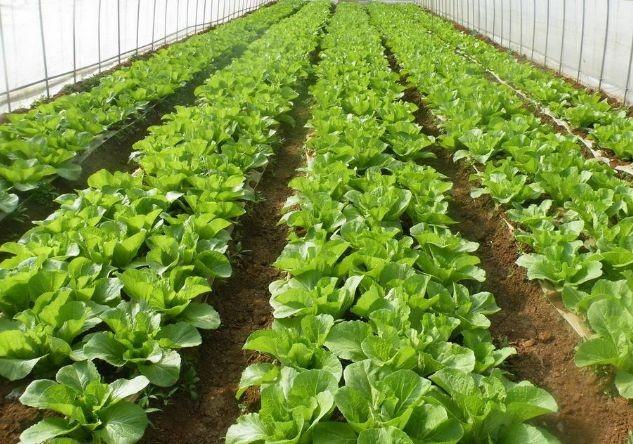 河南省经济作物推广站关于印发《2019年全省蔬菜春季管理技术意见》的通知