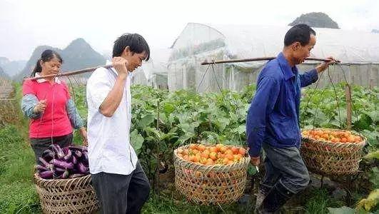 专家解读:发展适度规模经营的当下,为什么还要大力扶持小农户?