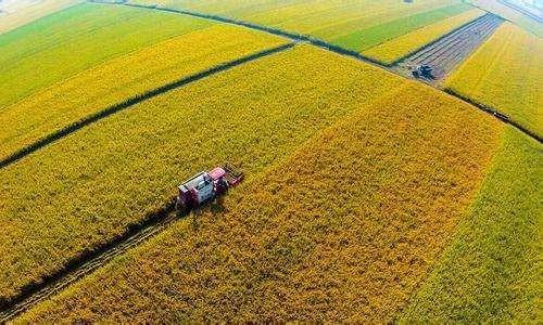 农业农村部关于毫不放松抓好2019年粮食生产的通知