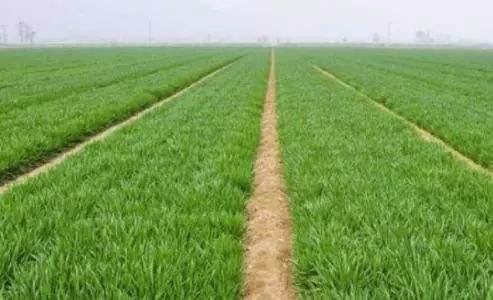 2019年春季农作物科学施肥指导意见