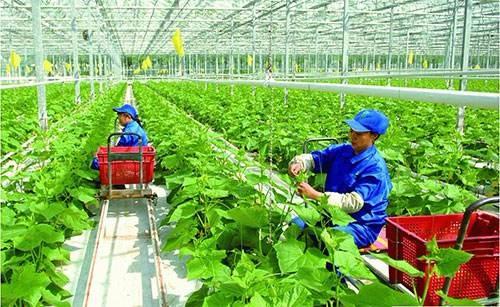 加强社会化服务 促进小农户和现代农业发展有机衔接