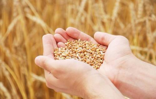 调整优化补贴政策确保粮食长期安全