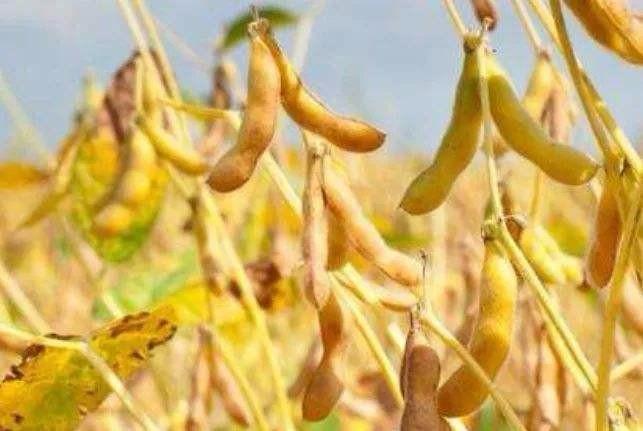 韩长赋:将对玉米和大豆生产者给予补贴 水稻最低收购价保持稳定