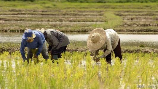 全国人大代表高春燕:加大对山区半山区特色农产品精深加工的支持力度