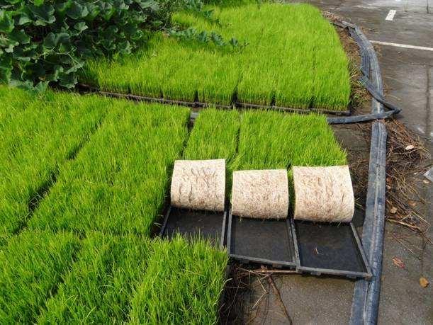 江西省关于印发水稻育秧中心建设项目实施方案的通知