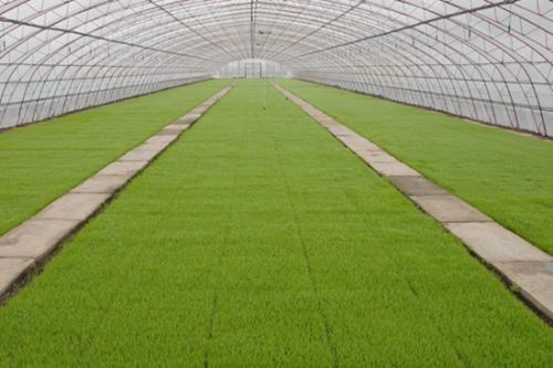 黑龙江对水稻智能浸种催芽实施补贴