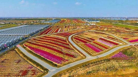 强化农业科技创新 促进乡村产业振兴