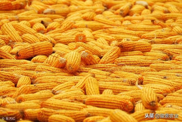 2000万吨进口玉米真的会来吗?看看消息来源!