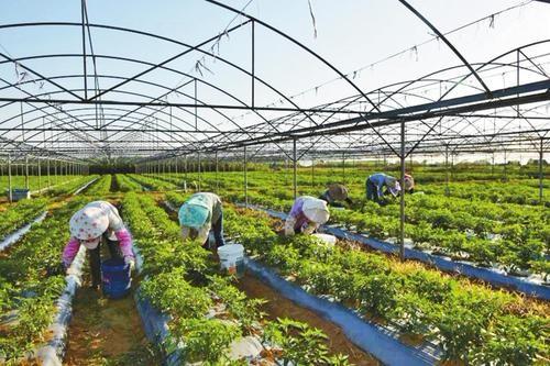 全国各类农业产业化组织辐射带动1.27亿农户 户年均增收超过3000元