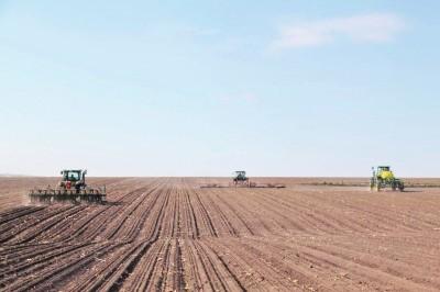 细分市场九三专用大豆未种先销