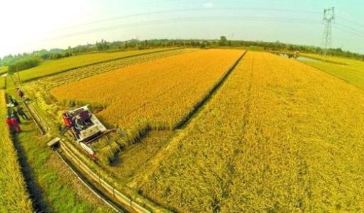 农村土地产权保护不能缺席