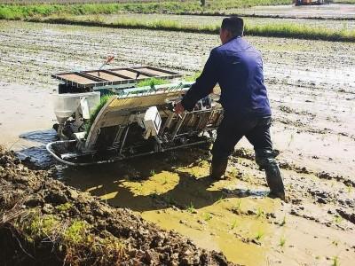 """农机企业也""""种田"""" 龙舟探索农业产业融合发展新模式"""