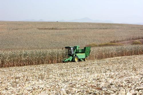 玉米籽粒低破碎机械化收获技术在河南的尝试