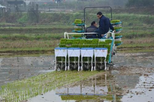 水稻机插秧同步侧深施肥技术阶段试验