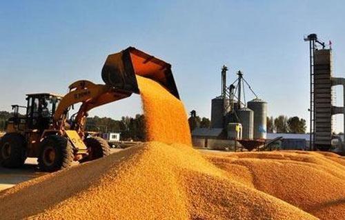 中储粮累计轮入收购新季玉米1000多万吨