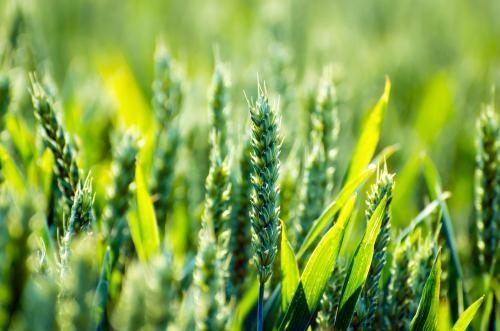 品牌点亮农业高质量发展之路