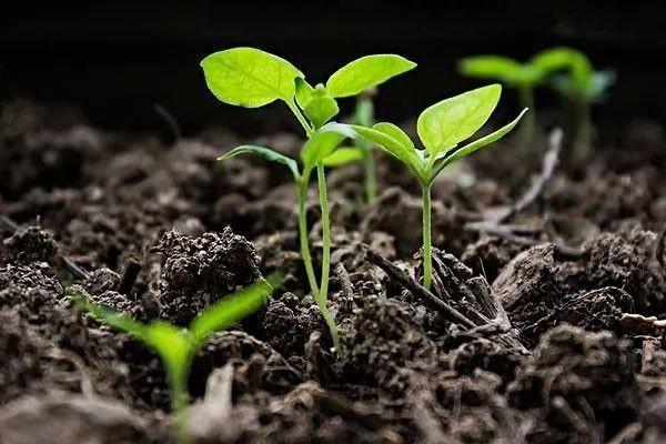 """""""变废为宝""""筑牢首都农业绿色基石——北京市建立农业废弃物全量利用技术模式"""