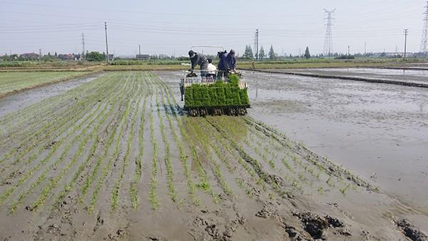 宁波市春耕农机化生产作业基本结束