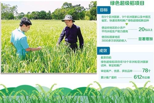 """绿色超级稻拥有""""超能力"""""""