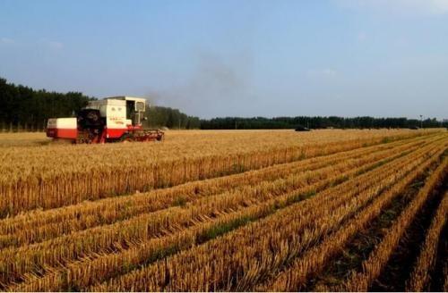 今年主产区六省实行小麦最低收购价政策