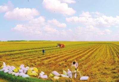 农田标准高种地底气足
