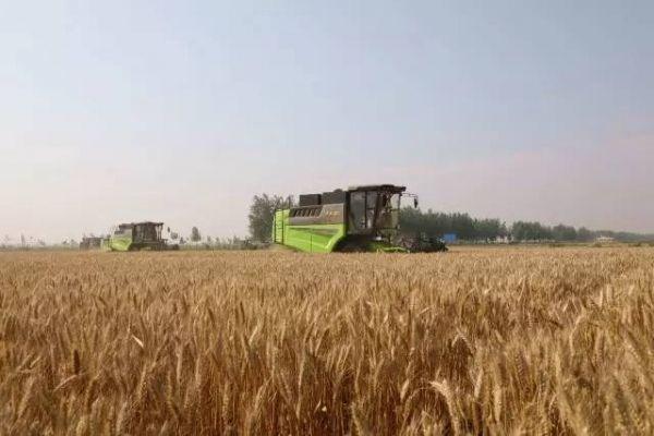 """安徽省农业农村厅关于做好""""三夏""""农机化生产工作的通知"""