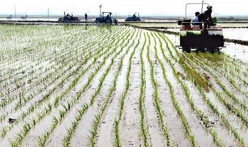 喜有春雨解忧 旱情仍须警惕——吉林水稻产区春耕见闻