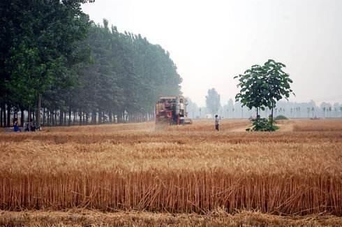 河南省关于2019年农机合作社示范社名单的公示