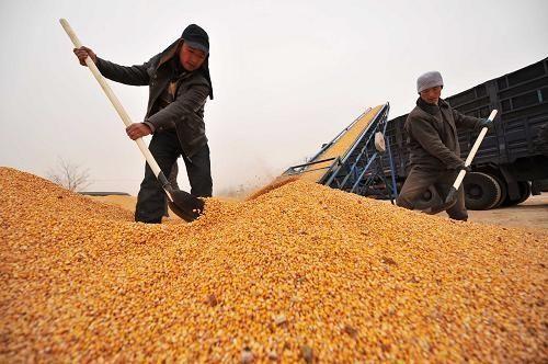 农发行2018年投放秋粮收购贷款超500亿元 保护种粮农民利益
