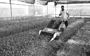《现代农业装备与应用》—— 蔬菜机械-收获机械