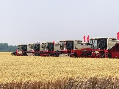 """山东进入麦收季轻松作业质量高 雷沃开启三夏""""无人驾驶""""模式"""